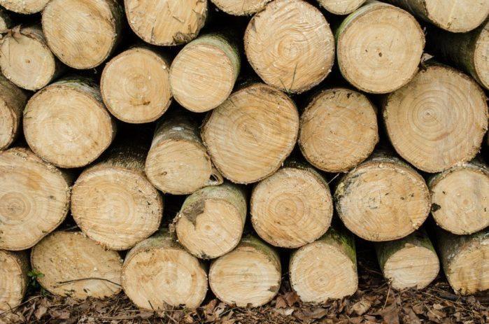 characteristics-of-parawood