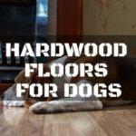 How to Select the Best Hardwood Floors for Dogs