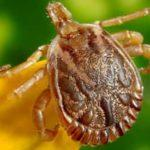 The Most Annoying Notorious Household Pests In The United States
