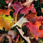 Ultimate Home Maintenance Checklist To Get Your Home Ready For Autumn