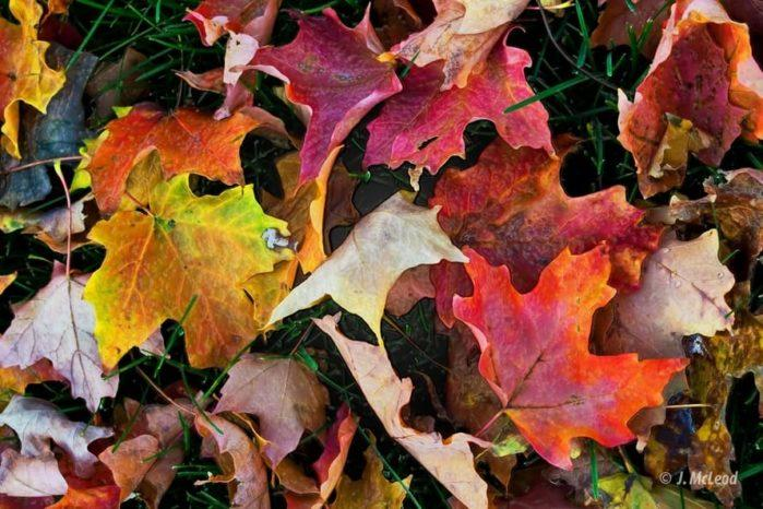 Fall preparations