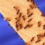 3 Proven Tips to Make Your Home Ant-Free