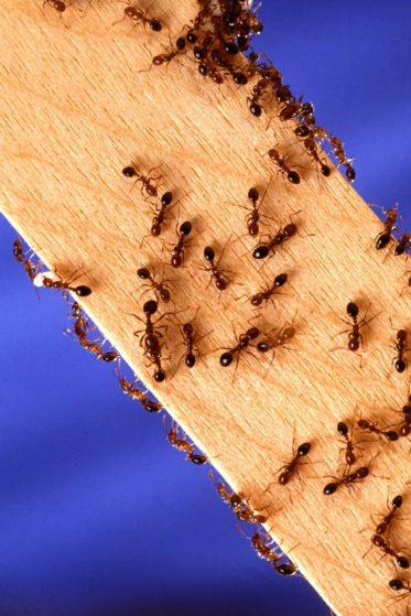 Tips to Make Your Home Ant-Free