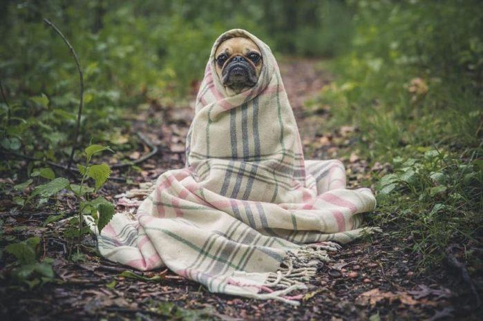 How to keep dog warm outside