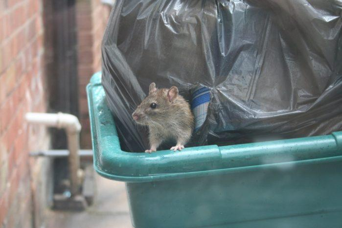Negative Effects Of Improper Rubbish Removal