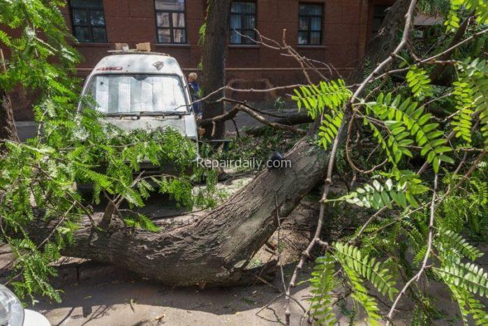 Tree Falls On House