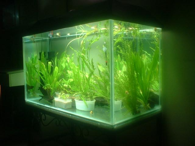 Guide To Custom-Built Aquariums