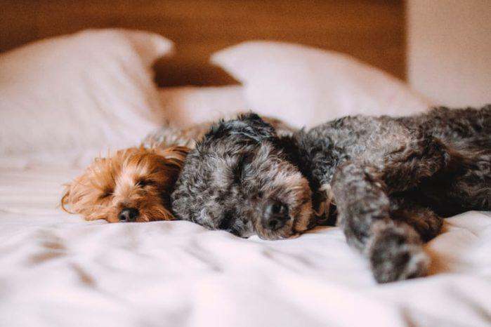 Keep Your Home Clean With Pets