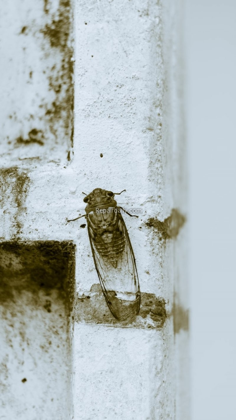 pest insect