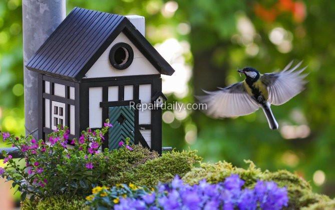 bird flying tgo birdhouse