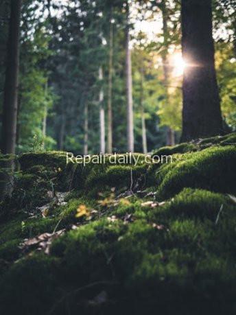 forest trees sunlight