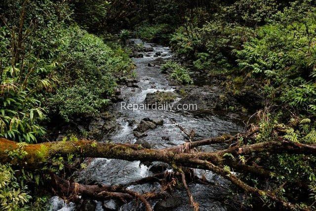 river tree bridge